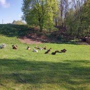 Nikolaus Kugler Bio Tiernahrung Bio Hundefutter artgerecht, gesund und ökologisch Fleisch pur